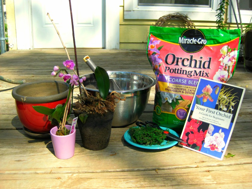 Orchid Potting Tools