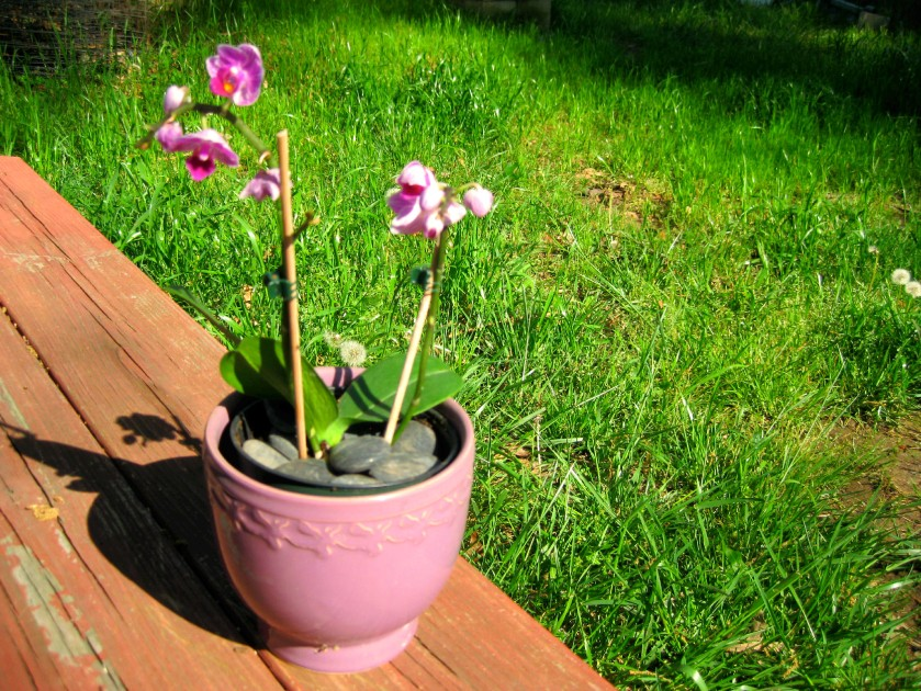New Orchid 2