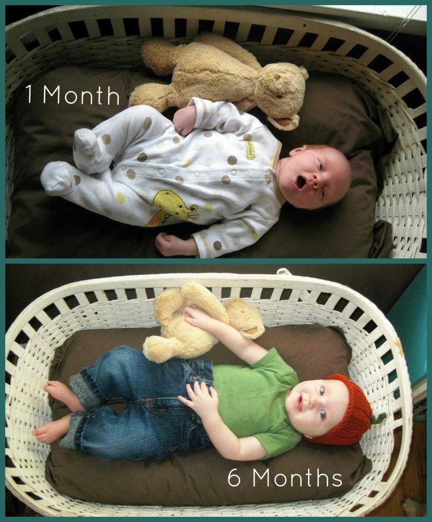 1 Month vs 6 Month